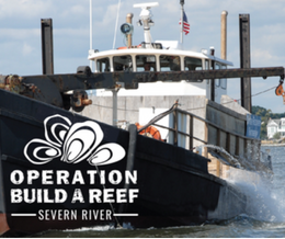 operation build a reef: severn river