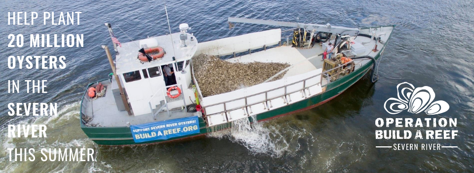 Overhead view of boat planting oysters
