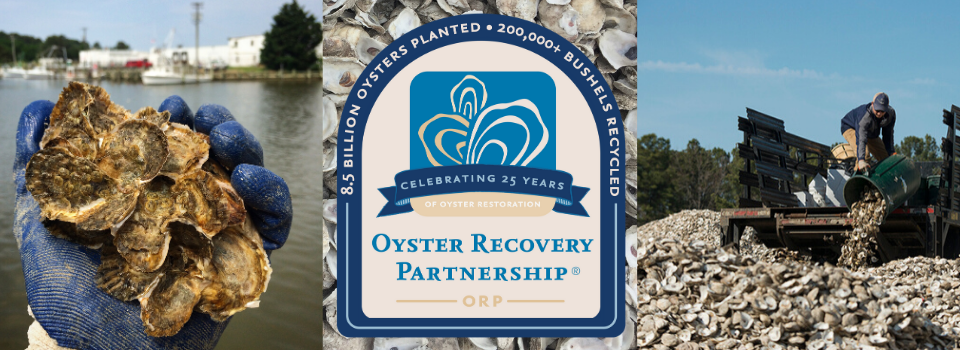 Celebrating 25 Years of Oyster Recovery