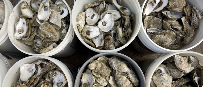 oysters101image