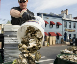 eating oysters improves bay health