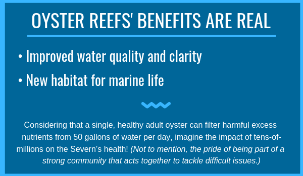 OYSTERS REEFS' BENEFITS ARE REAL 2