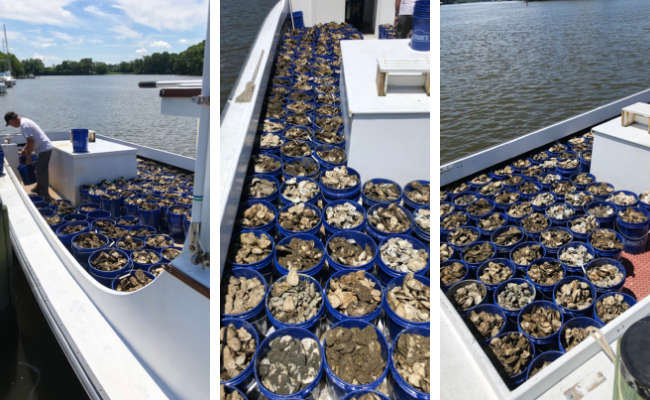 waterman boat full of oysters
