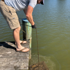 Man standing on dock pulls oyster cage out of water
