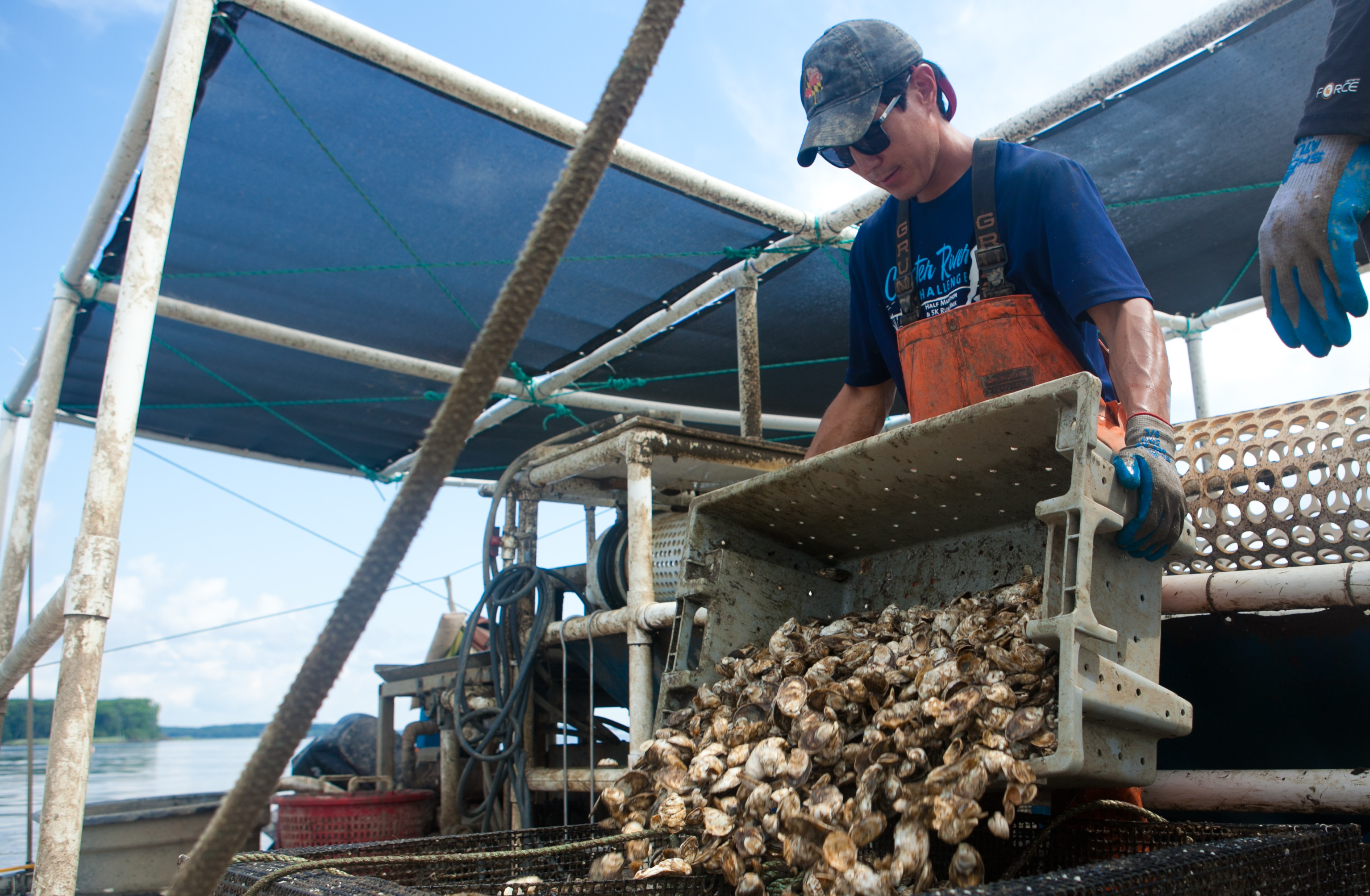 Support the Chesapeake's Seafood Industry