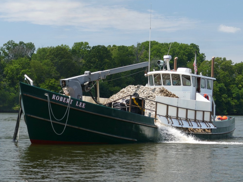 Severn River Receives Boatload of Oysters through Operation Build-a-Reef