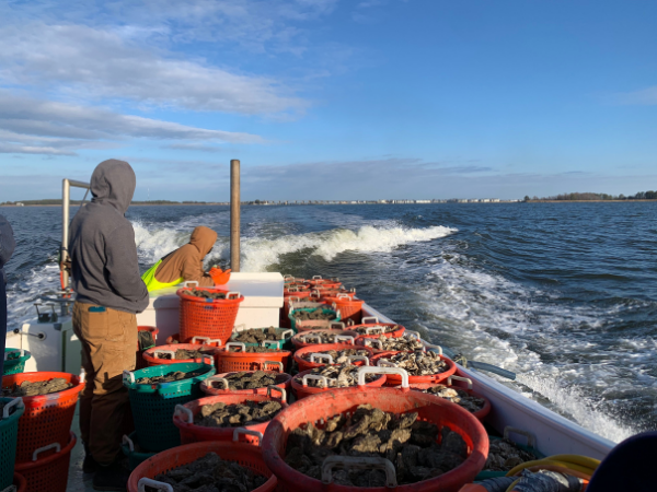 ORP Supports Round 2 of SOAR Plantings in the Chesapeake Bay