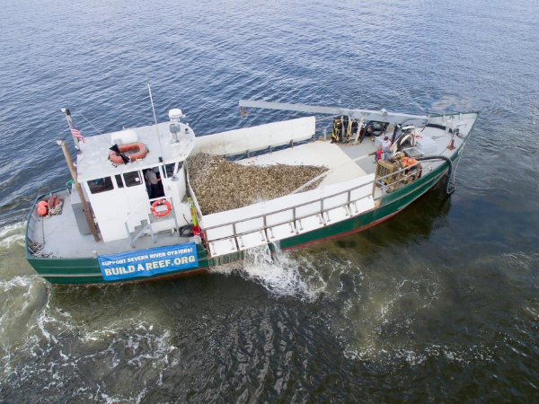 Operation Build-a-Reef: Severn River sets goal to plant 20 million oysters in 2021