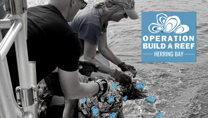 Operation Build-a-Reef: Herring Bay